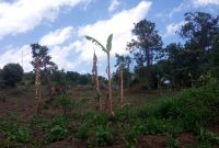 Acres of land for sale in Kakiri