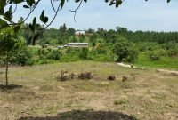 Land for sale in Namanve Industrial area