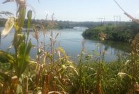 Land for sale in along the Nile in Jinja