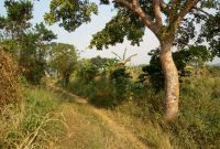 Land for sale in Bombo