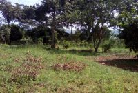 land for sale in Buikwe district 6m per acre