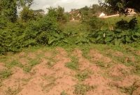 Land for sale in Ntinda