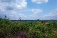 578 acres of lanf for sale in Kakoge Luwero at 1.8m per acre