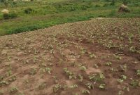 Commercial land for sale in Kyaliwajjala