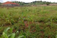 3 acres for sale in Nalumunye at 400m per acre