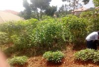 50x100 ft plot of land for sale in Kira at 35m