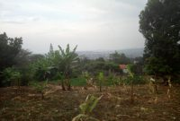 300 acres of land for sale in Luwero Mazzi at 2m per acre