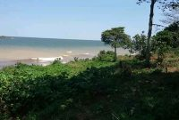 7 acres of beach front property for sale in Kasenyi at 150m per acre