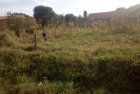 60x200ft Land for sale in Mbalwa at 150m
