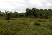 150 acres of land for sale in Nkozi 3m per acre