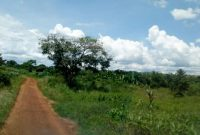20 acres of farm land for sale in Amach Lira at 6m per acre