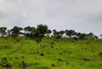 Plots for sale in Ireda Lira city beginning at 20m