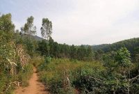 25 acres of farm land for sale in Apii Lira at 18m per acre