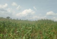 plot of land of 20x30 meters for sale in Akia Lira City at 24m shillings