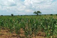 plots of land for sale in Bara Apwo Lira city from 15m