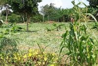 This is 3.5 acres of land for sale in Senior Quarters Lira city at 250m shillings