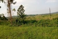 100x100 meters of land for sale in Senior Quarters Lira city at 450m shillings