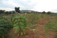 Plots of land for sale in Ayago starting at 15m shillings