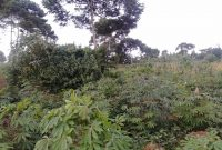4 acres for sale in Kawuku 150m