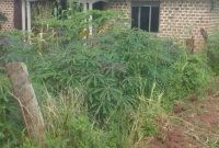 3 bedroom house for sale in Nabuti Mukono at 60m