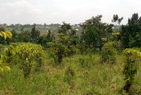 85 decimal plot for sale in Gombe Sambe at 22m off Matugga Semuto road