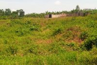 50x100ft plots for sale in Matugga Kavule at 18m each