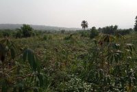 637 acres of land for sale in Kiboga at 2.8m per acre