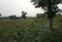 50 acres of farmland for sale in Nakaseke at 3m per acre