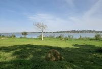 4 acres touching lake Victoria for sale in Kasanje at 180m per acre