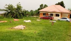 10 acre farm with farm house for sale in Bujjuko at 900m