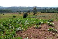 33 acres for sale in Kasanje at 60m each