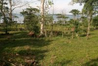 5 acre beach front land for sale in Kalangala Island at 500m
