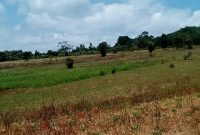 300 acres for sale in Nakawuka at 65m each