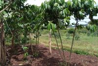 3 acres of land for sale in Bubebere Kasanje at 40m per acre