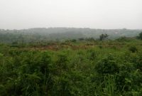 40 acres for sale in Kata Bombo road at 100m each