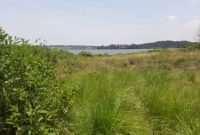 40 acres of lake shore land for sale in Kawuku at 300m