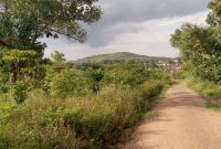 These are 5 acres of land for sale in Luwube trading center in Luwero ideal for agriculture or real estate going for 25m per acre