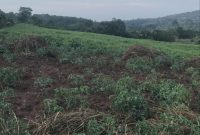 260 acres of farmland for sale in Maya Bulwanyi at 15m per acre