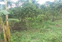 30 acres of land for sale in Luwero Kasana at 8m each