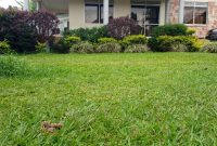 4 bedroom house for sale in Muyenga with lake view at 650m