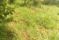 85 acres farm land for sale in Nakasongola at 2.5m per acre