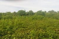 4 acres for sale in Buyege Kasanje at 45m Per Acre