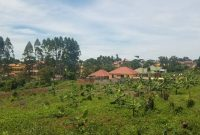 2 acres for sale in Kira Bulindo at 500m