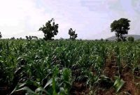 100 acres of land for sale in Zirobwe at 30m each