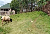 5ox100ft plot for sale in Namugongo at 55m