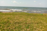 15 acres touching lake Victoria for sale in Garuga at 430m