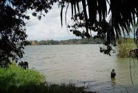 80 acres for sale in Bwerenga on Lake shore at 250m each
