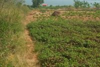 6.8 acres touching water for sale in Kawuku at 500m each