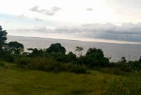 200 acres of land for sale in Ssi Kisigula at 20m per acre