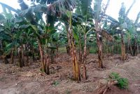 50x100ft plot of land for sale in Matuga Kavule at 14.5m